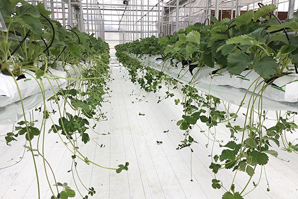 高設栽培装置
